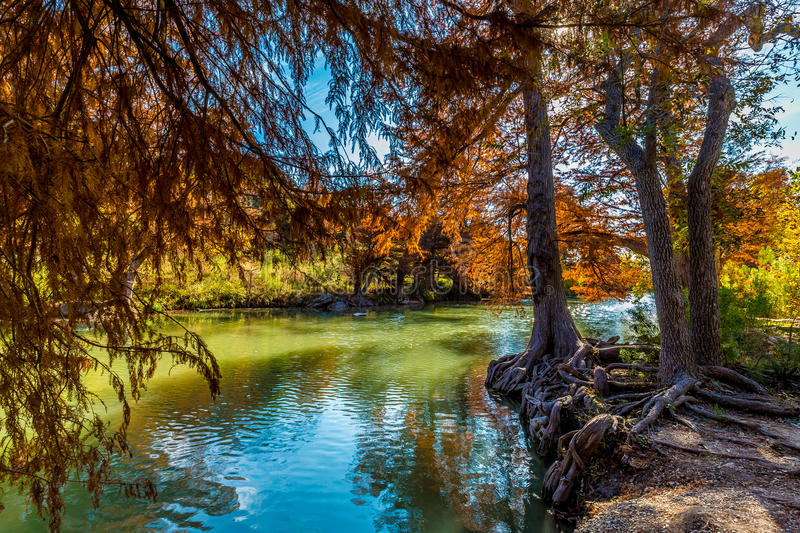 Fall Foliage at Guadalupe State Park, Texas. Fall Foliage on Large Cypress Trees on the Guadalupe River at Guadalupe State Park, Texas stock photos