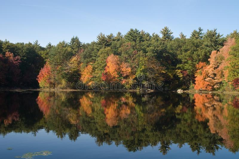 Fall foliage at Harold Parker State Forest royalty free stock photo