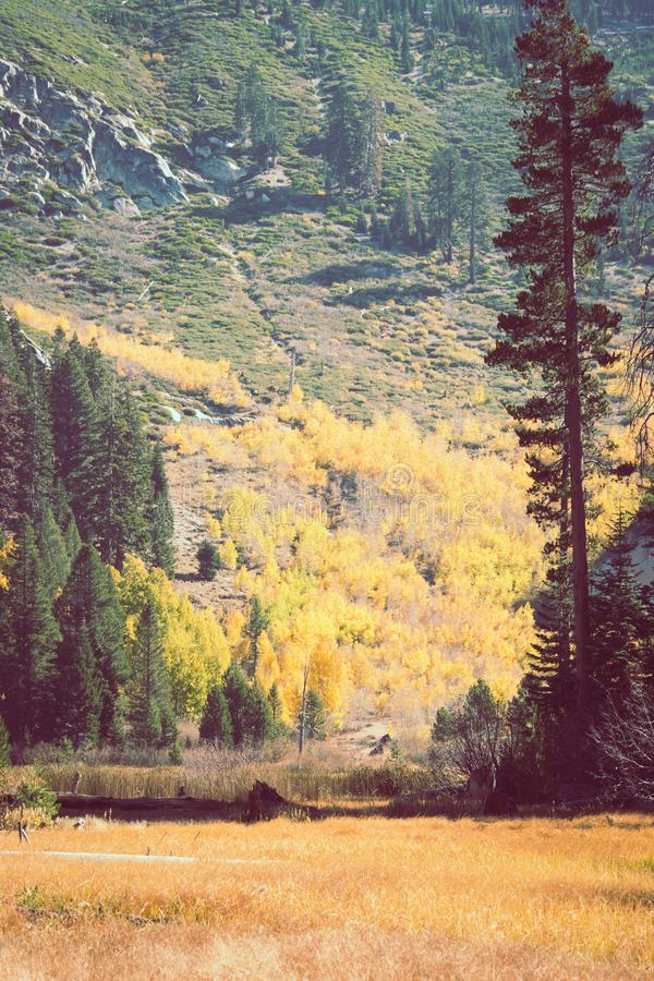 Free Fall Foliage In Mammoth Lakes, California, With Sotcher Lake Partially Hidden In The Background. High Elevation Lake In The Sierra Royalty Free Stock Photo - 139029215