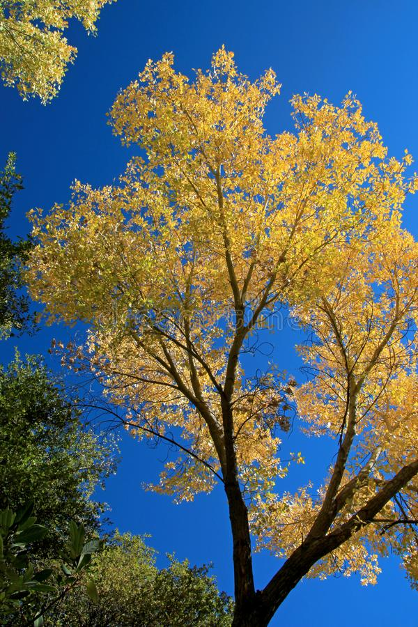 Fall foliage in orange, yellow and green against blue sky, Los Padres National Forest, USA stock photo