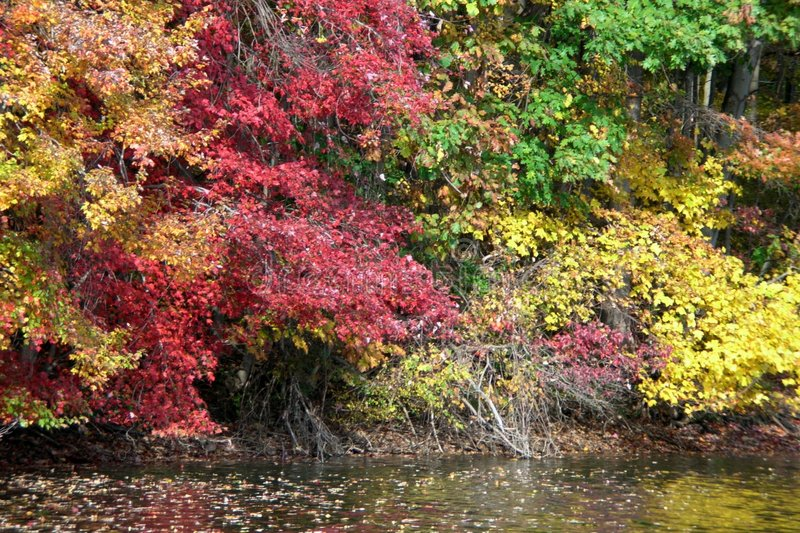 Fall foliage over the water royalty free stock images