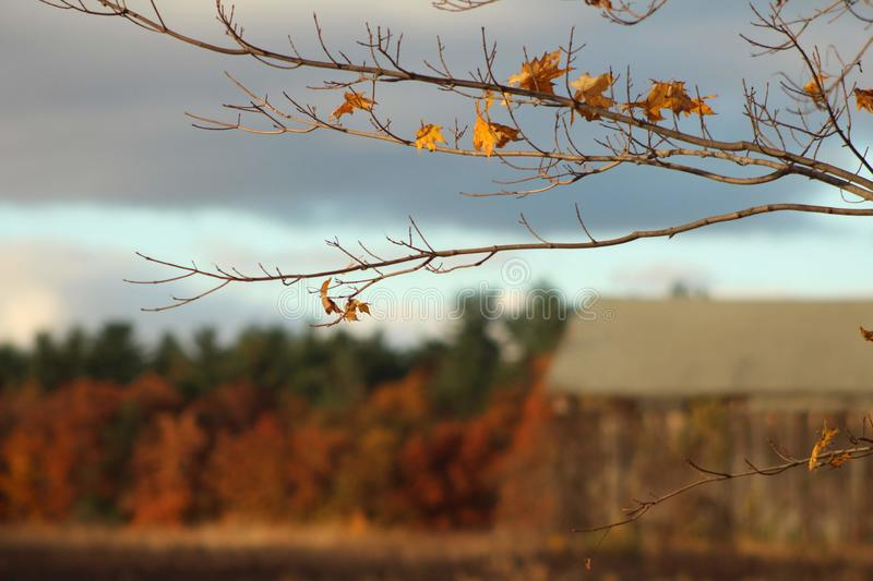 Fall foliage in perspective stock photography