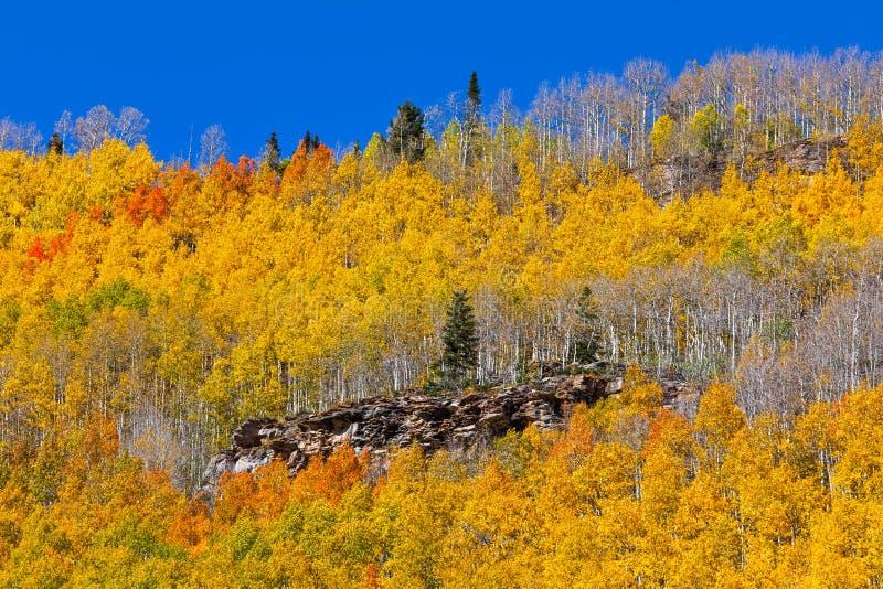 Fall foliage in the San Juan Mountains near Silverton, Colorado. stock photos