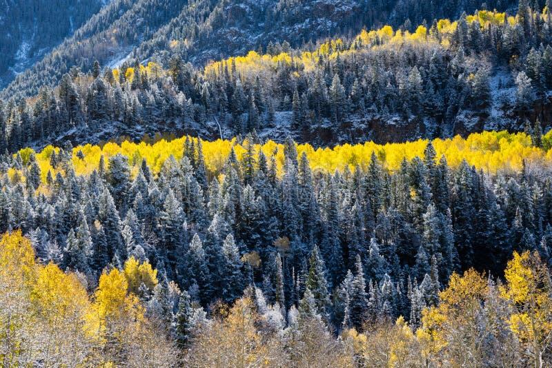 Fall Foliage in the San Juan Mountains stock photos