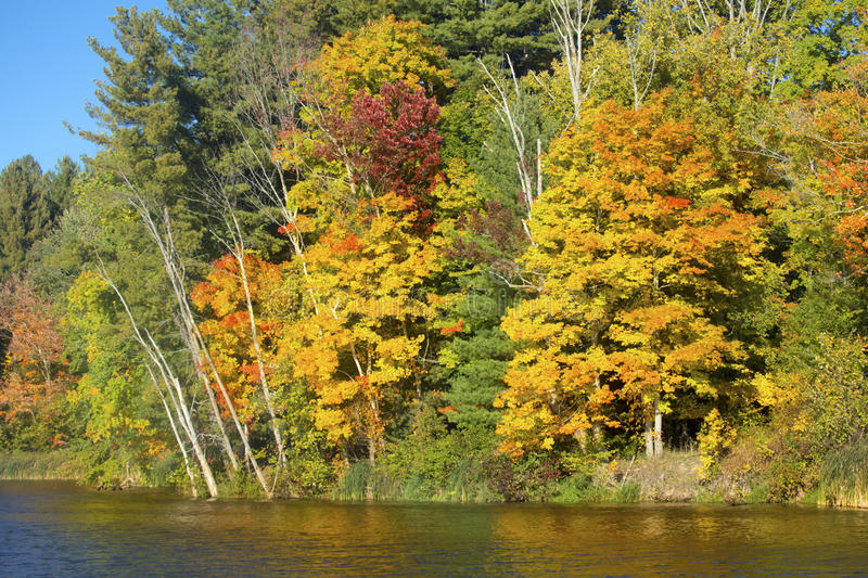 Fall foliage on shore of Mill Pond, Connecticut. Colorful fall foliage along shoreline of Broad Brook Mill Pond on a sunny day in East Windsor, Connecticut stock photography