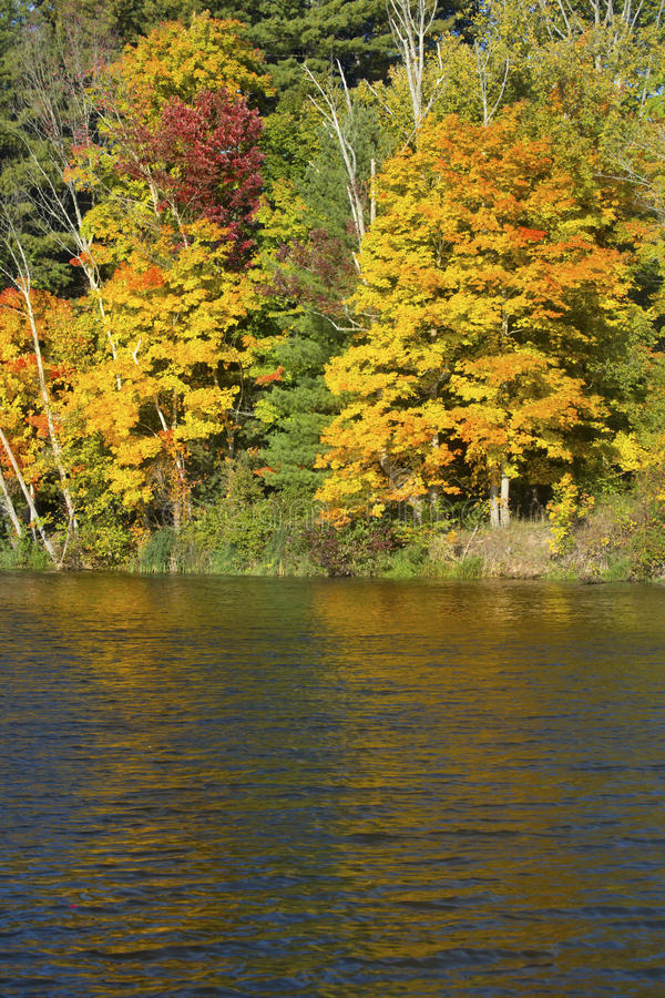 Fall foliage on shore of Mill Pond, Connecticut. Colorful fall foliage along shoreline of Broad Brook Mill Pond on a sunny day in East Windsor, Connecticut stock images