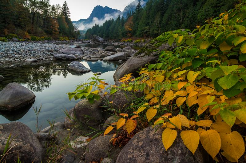 Fall Foliage on the Shore of the Skykomish River, Washington State royalty free stock photography