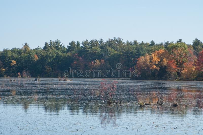 Autumnal foliage in Harold Parker State Forest in Andover, MA royalty free stock images