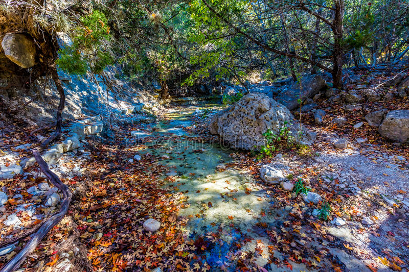Fall Foliage on Stunning Maple Trees, With Large Boulders and Clear Water in Lost Maples royalty free stock photos