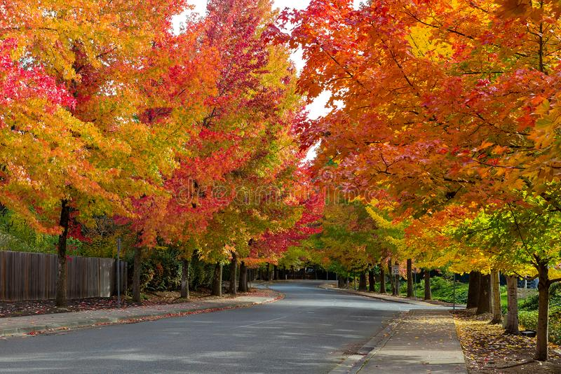 Fall Foliage on Tree Lined USA Suburban Neighborhood Street. Fall foliage on tree lined street in North American suburban neighborhood in autumn USA United stock photo