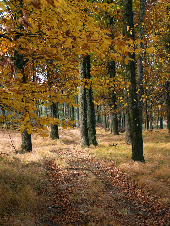 Download Fall forest #01 stock photo. Image of handsome, green - 4898120