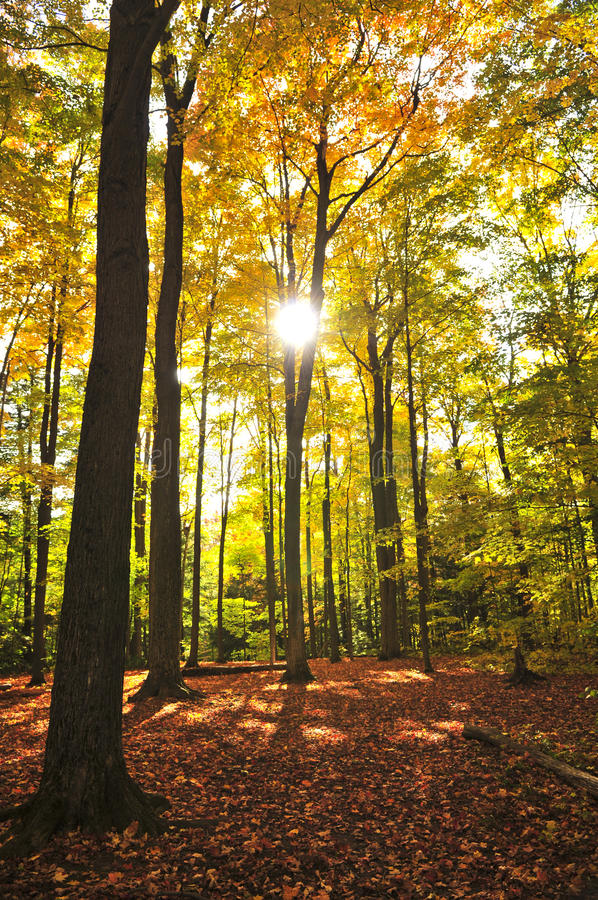 Free Fall Forest Stock Photo - 10466890