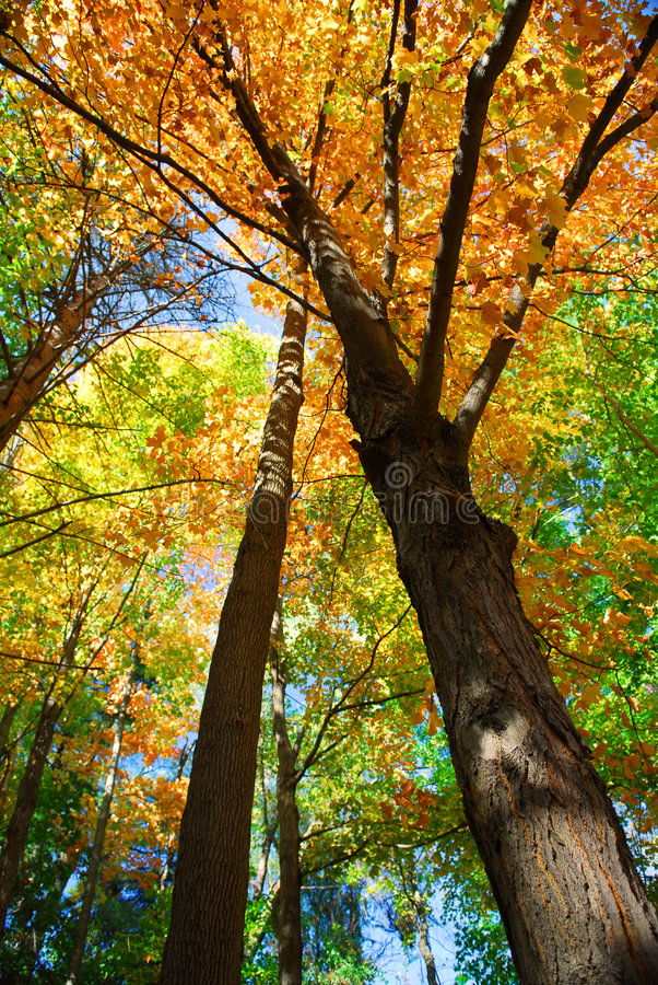 Free Fall Forest Stock Photo - 3392790