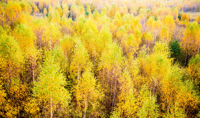 Fall forest stock photography