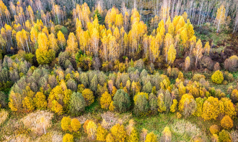 Fall forest stock images