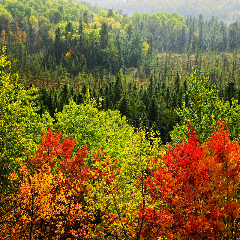 Fall forest rain storm. High view of fall forest with colorful trees in rain storm royalty free stock photos