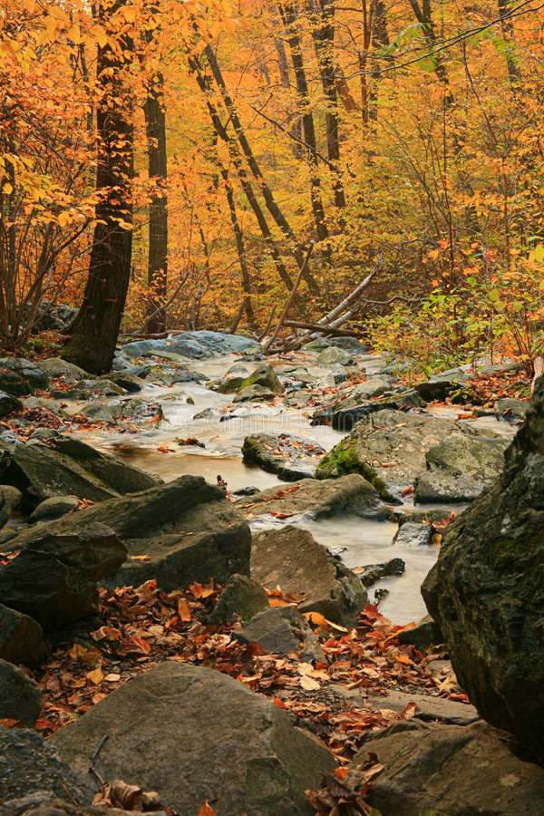 Fall Forest Stream stock photo