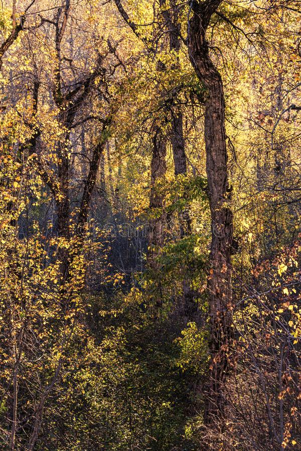 Fall forest symphony royalty free stock photography