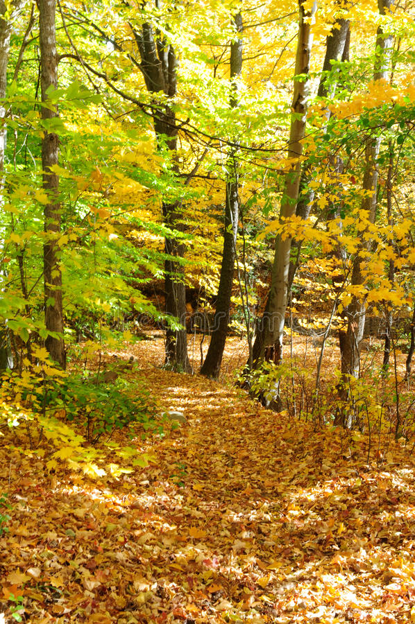 Fall Forrest stock photography