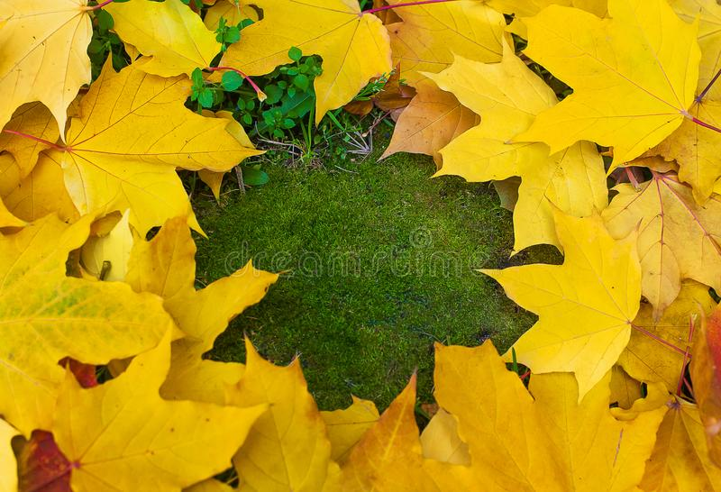 Fall frame made of coloful autumn leaves on green mossy background with empty space for text. Outdoor fall concept stock image