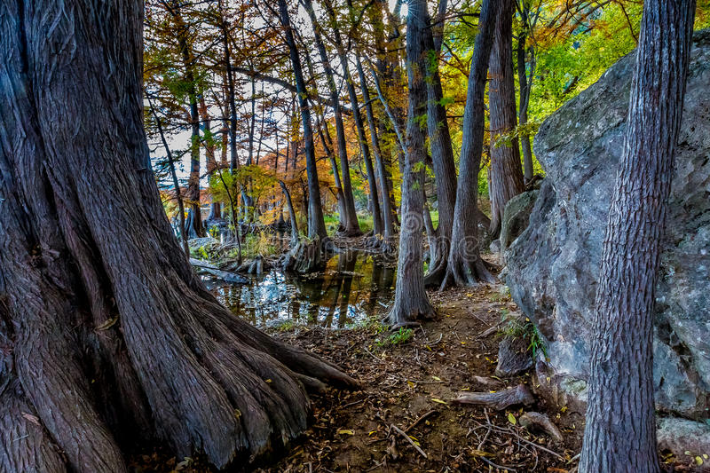 Fall at Garner State Park, Texas. Beautiful Fall Foliage Surrounding the Clear Frio River, Texas royalty free stock image