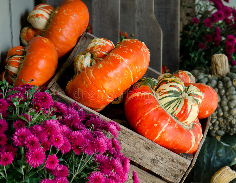 Fall gourds and mums stock photo