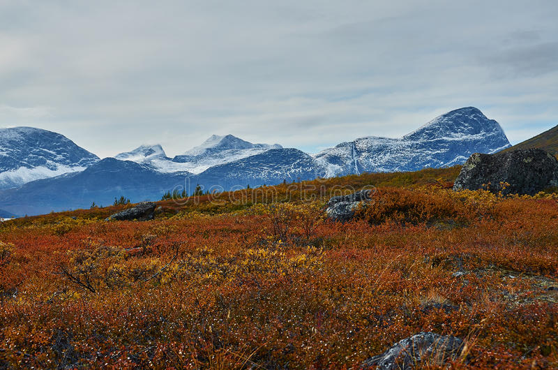 Fall in Greenland stock image