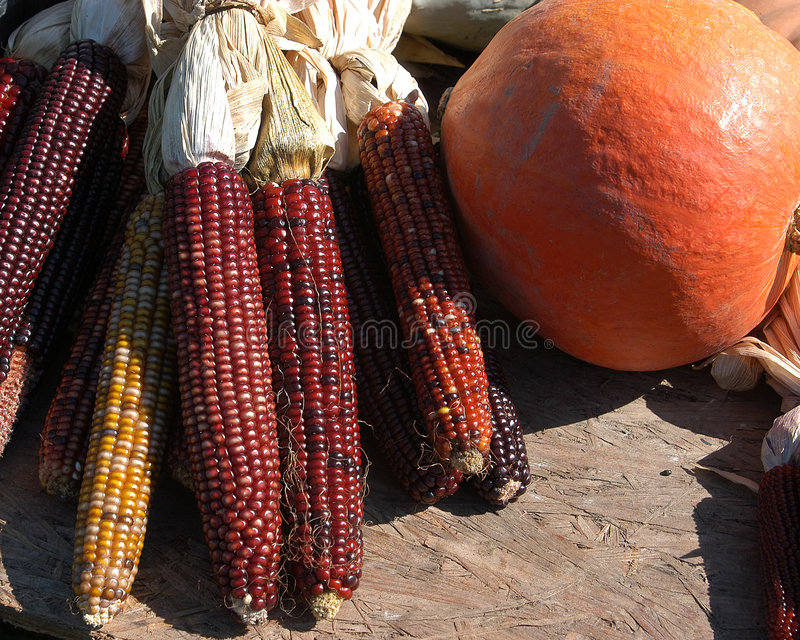 Download Fall Harvest stock photo. Image of indian, corn, agriculture - 30426