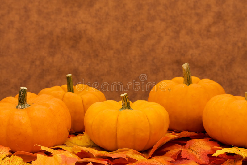 Download Fall Harvest Stock Images - Image: 6441344