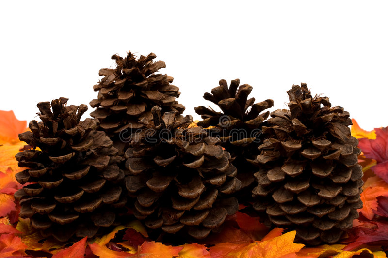 Download Fall Harvest Border stock image. Image of leaf, fall, isolated - 7092777