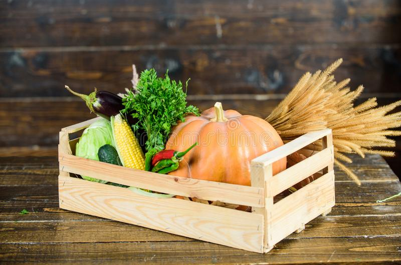 Fall harvest concept. Autumn harvest crops vegetables. Locally grown natural food. Farmers market. Homegrown vegetables. Ripe local farm vegetables. Fresh royalty free stock photography