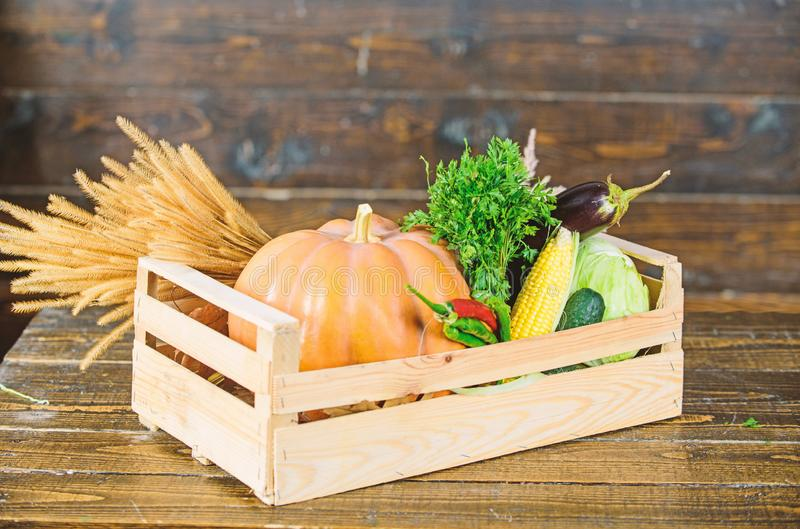 Fall harvest concept. Autumn harvest crops vegetables. Locally grown natural food. Farmers market. Homegrown vegetables. Ripe local farm vegetables. Fresh stock image