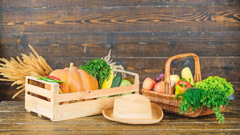 Fall harvest concept. Autumn harvest crops vegetables. Locally grown natural food. Farmers market. Vibrant and colorful. Vegetables. Homegrown vegetables. Fresh royalty free stock images