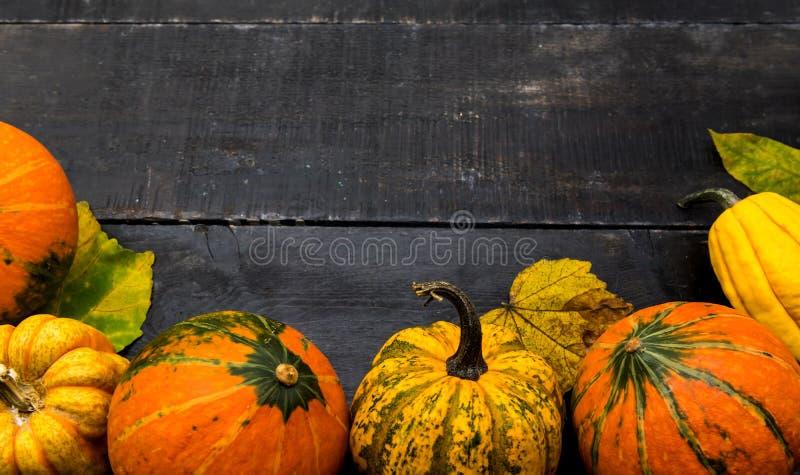 Fall harvest cornucopia. Autumn season with fruit and vegetable. stock photos