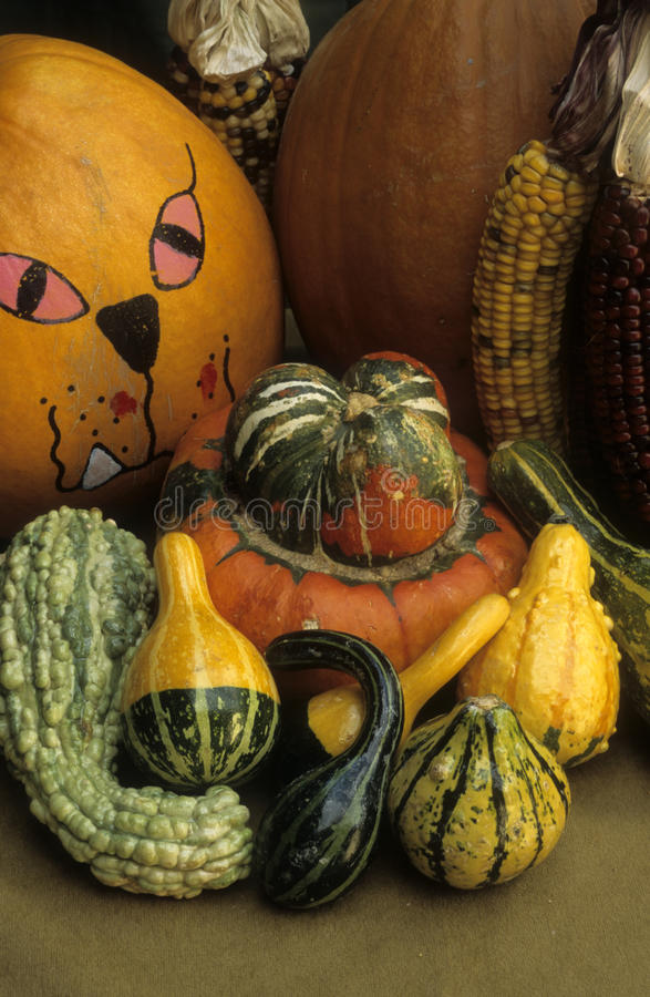 Fall harvest pumpkin, gourds, and maize royalty free stock image