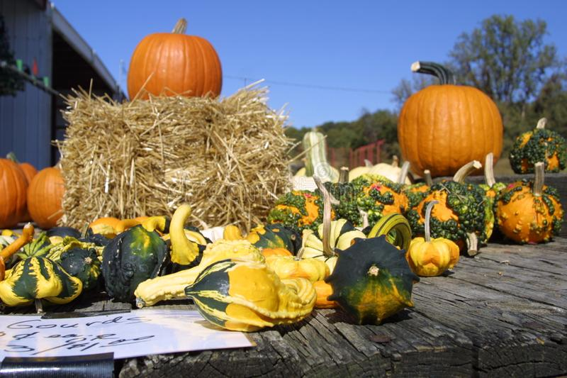 Fall Harvest Sale 2019 I stock images