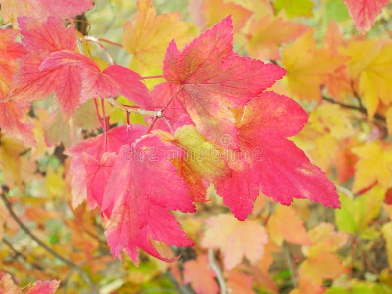 Fall-/Herbstlaubhintergrund - Fotos auf Lager stockfotografie
