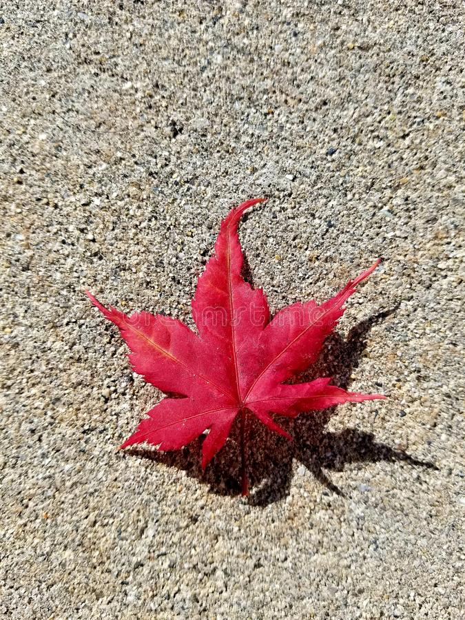 Fall. Is here royalty free stock image