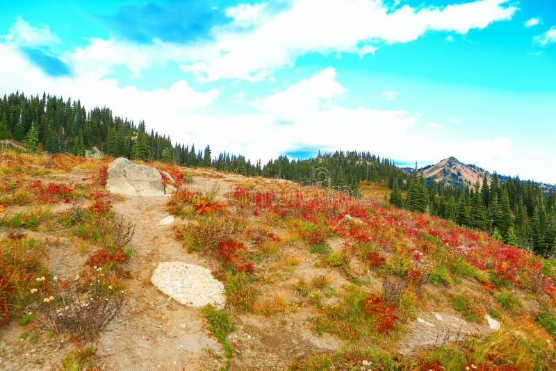 Fall hike at Mount Rainier national park , Washington royalty free stock image
