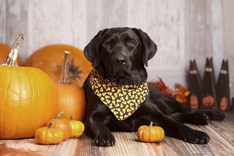 Fall-Hundeporträt lizenzfreie stockbilder