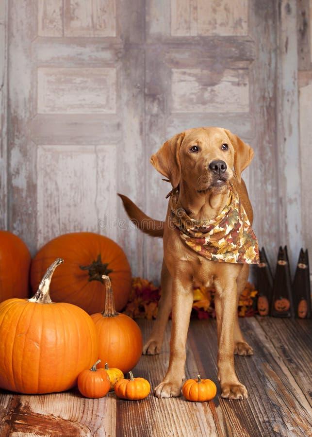 Fall-Hundeporträt lizenzfreies stockfoto