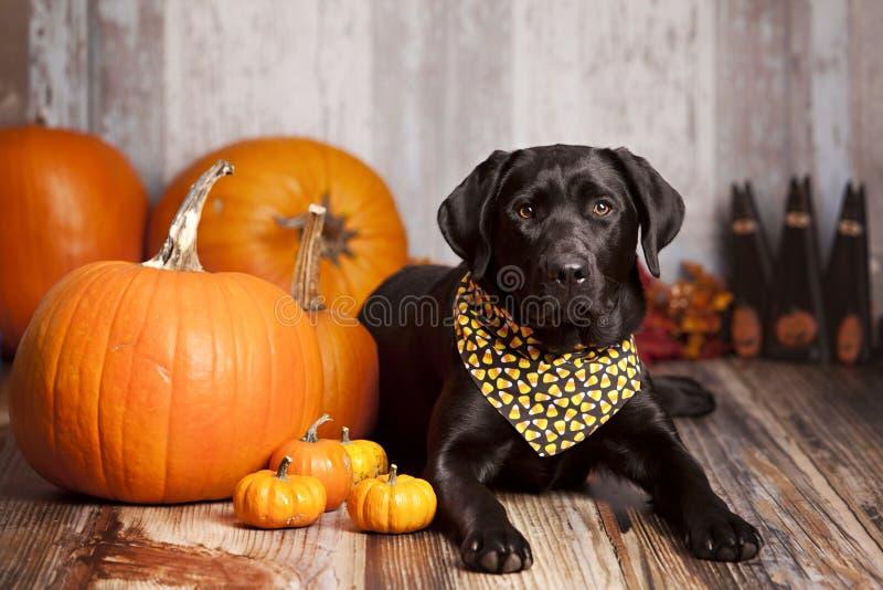 Fall-Hundeporträt stockbild