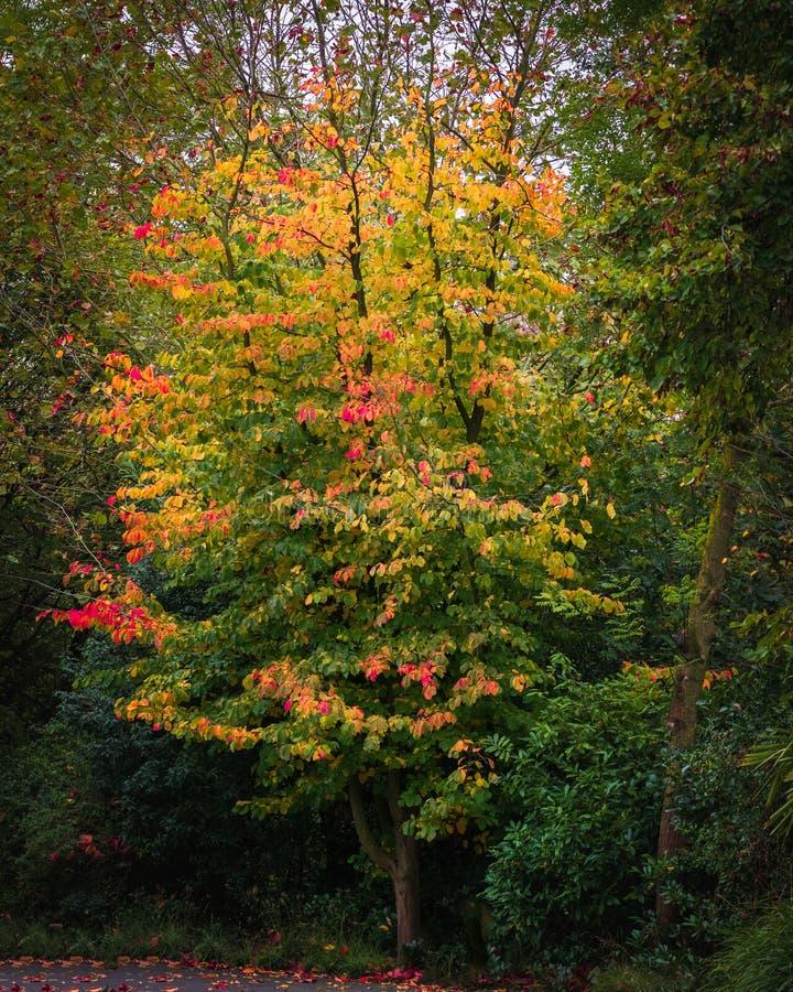 Autumn fall and Colour royalty free stock photos