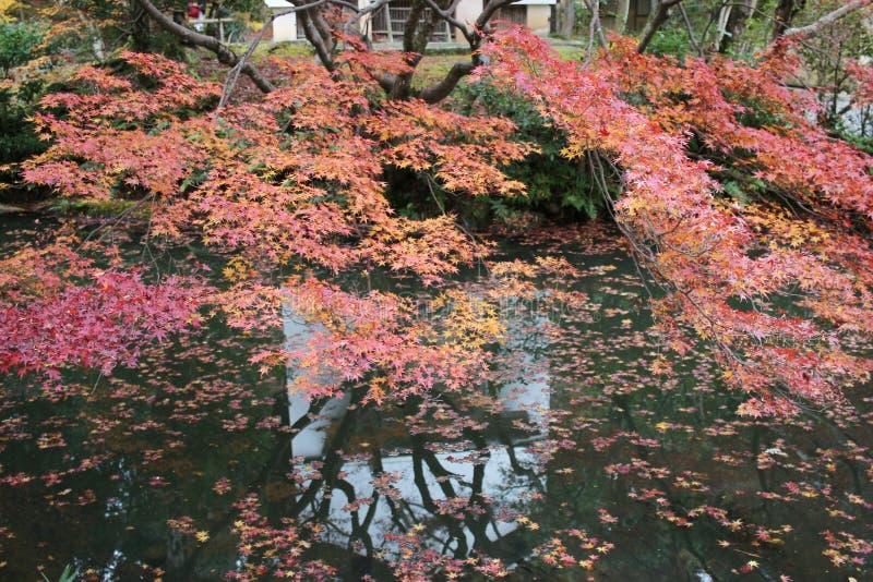 The Autam garden in Konkai Komyoji Temple. Fall in Konkai Komyoji Temple position Residents stock photo
