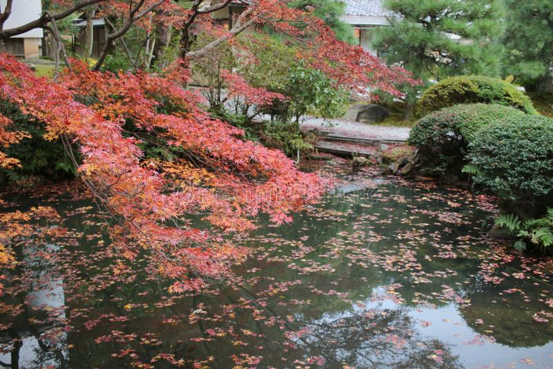 The Autam garden in Konkai Komyoji Temple. Fall in Konkai Komyoji Temple position Residents stock images