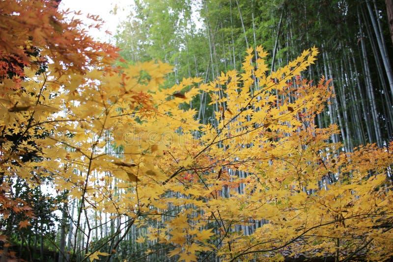 The Autam garden in Konkai Komyoji Temple. Fall in Konkai Komyoji Temple position Residents royalty free stock photo
