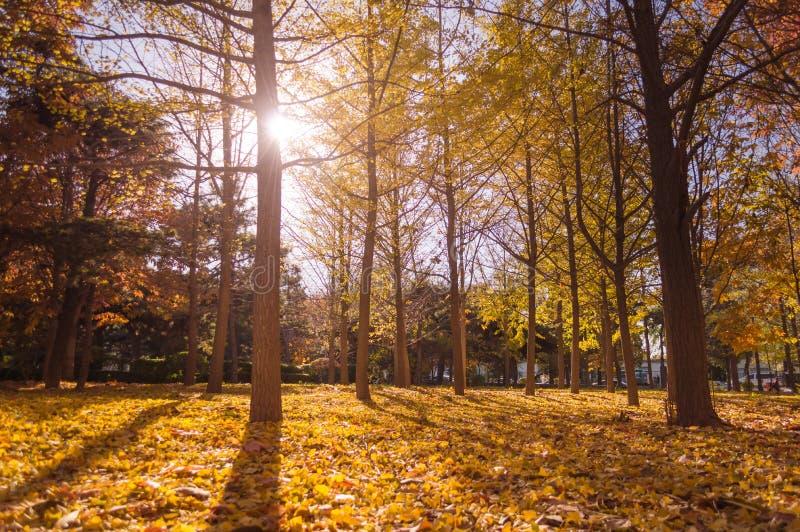 fall låter vara den färgglada skogen för hösten landskap fotografering för bildbyråer