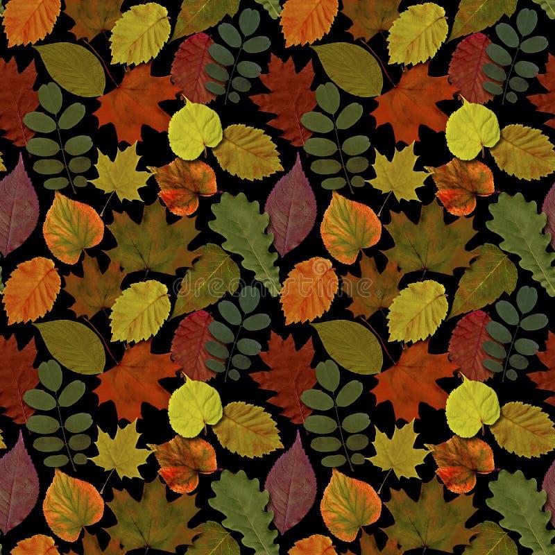 Fall l?sst nahtlosen Musterhintergrund Buntes Laub des Herbstblattes stockbild