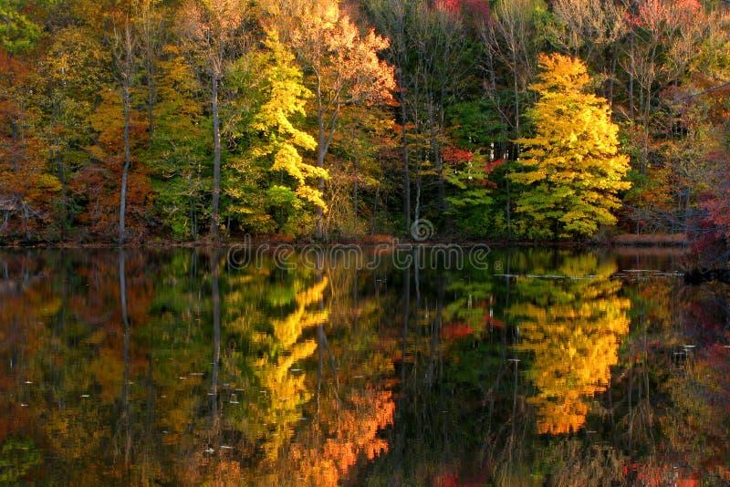 fall lake scene trees 图库摄影