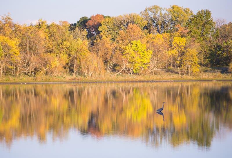 Fall Lake Shore royalty free stock images